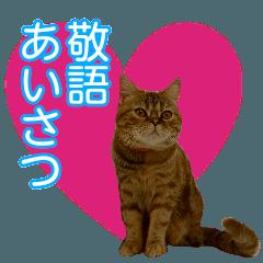 【ねこ】猫まみれ写真スタンプ 敬語