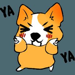 Welsh Corgi<Swedish Vallhund>