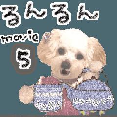 """トイプードル""""るんるん"""" 〜ムービー5〜"""