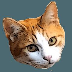 Papa Cat