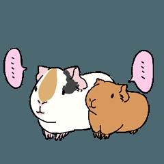 A provocative guinea pig