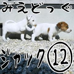 [LINEスタンプ] みえどっぐスタンプ ジャックラッセル編 12