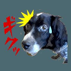 み〜んな保護犬スタンプ