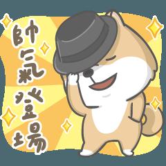 Shiba daily