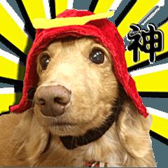 柴犬&ダックスフント大好き
