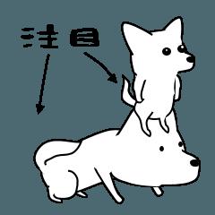 激しく尻尾をふるイヌ3