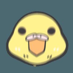 文鳥とセキセイインコ