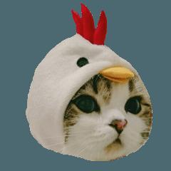 マンチカン〝のんちゃん〟の実写猫スタンプ