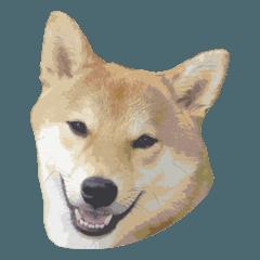 リアル柴犬