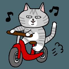 グレーの豆猫