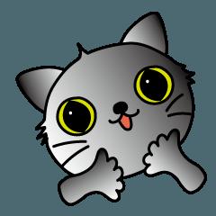 子猫の名前は、ソラです。