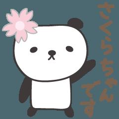 さくらちゃんパンダ panda for Sakura