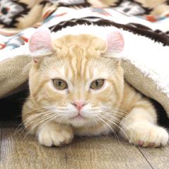 猫カフェロンロン広島店スタンプ
