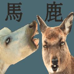カオスな動物達2