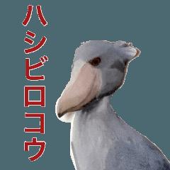 キモ可愛い鳥ハシビロコウ
