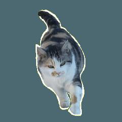 まっさんの ネコ風スタンプ バージョン8