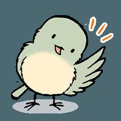 ふっくら小鳥の日常