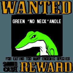 嫌われ者のグリーンアノール