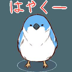 ★★よく動く!!生意気な青い鳥★★