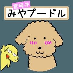 宮崎弁みやプードル