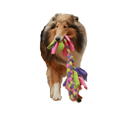 [LINEスタンプ] rough collies love 1 (1)
