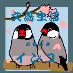 文鳥生活ときどきインコ 4弾