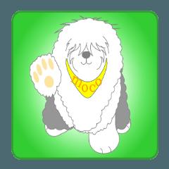 "Old English sheepdog""モコちゃん""登場!"