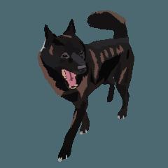 甲斐犬(黒多め)