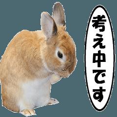 動く、ウサギのココア-4