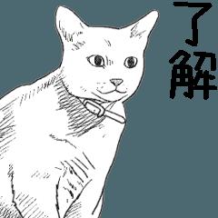 絵から写真へ変化する猫2