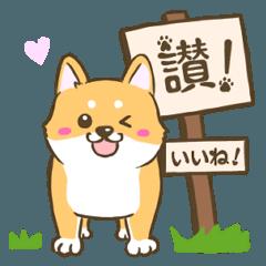 【台湾語&日本語】看板犬