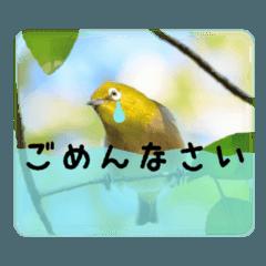 かわいいメジロさん (野鳥写真スタンプ1)