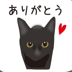 くろねこ黒猫