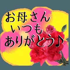 母の日に花を♪カーネーション