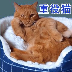重役猫の写真スタンプ