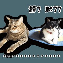 Angel's beauty cat-Bear&Wan
