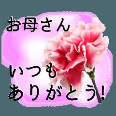 母の日に花を♪Part2 カーネーション