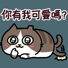 A cute cat of the sinkcomic--Caca