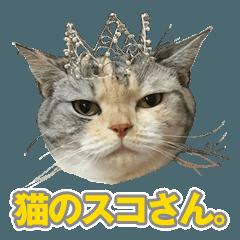 猫のスコさん。