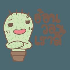 Cactus Mood