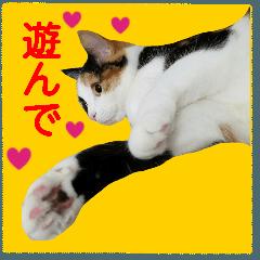 【ねこ】猫まみれ写真スタンプ ラムちゃん