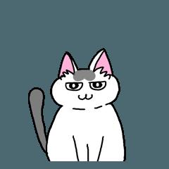 猫です。会話できます(関西弁)