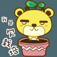 Bear lulu