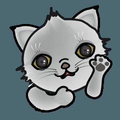 やんちゃ猫 名前は太郎