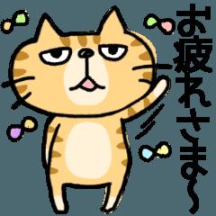 [LINEスタンプ] 【お試しバージョン】ぶさかわにゃんこ (1)