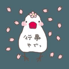 白文鳥 行事(オールシーズン)