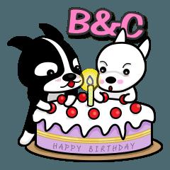 Boston Terrier & Chihuahua