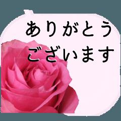 暮らしに花を♪バラ(敬語)