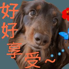 Big nose dog Toby IV
