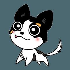 チワワ犬CHOCOのHappyLife